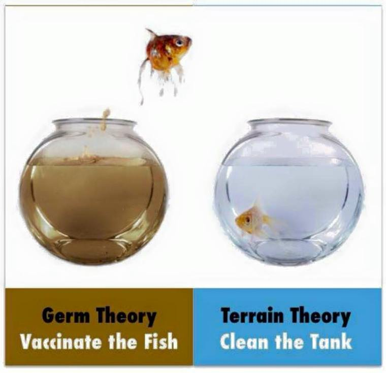 germ vs terrain theory